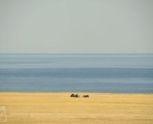 Aral od kuchni